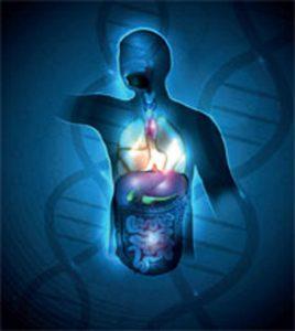 chronobiology, anatomy, health