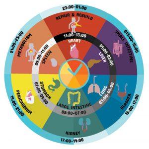 Chronobiology, time, anatomy, health