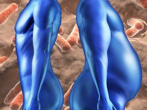 Gut Microbes, Obesity, Circadian Rhythm
