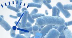 Darmmikroben, Fettleibigkeit und der Biorhythmus
