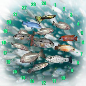 Survival of the Fittest, Mexican Tetra, Circadian Rhythm