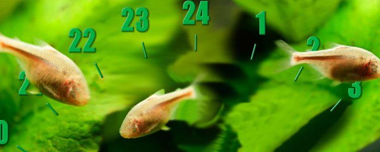 Der Stärkste überlebt: Der mexikanische Salmler verliert zur Anpassung seinen circadianen Rhythmus