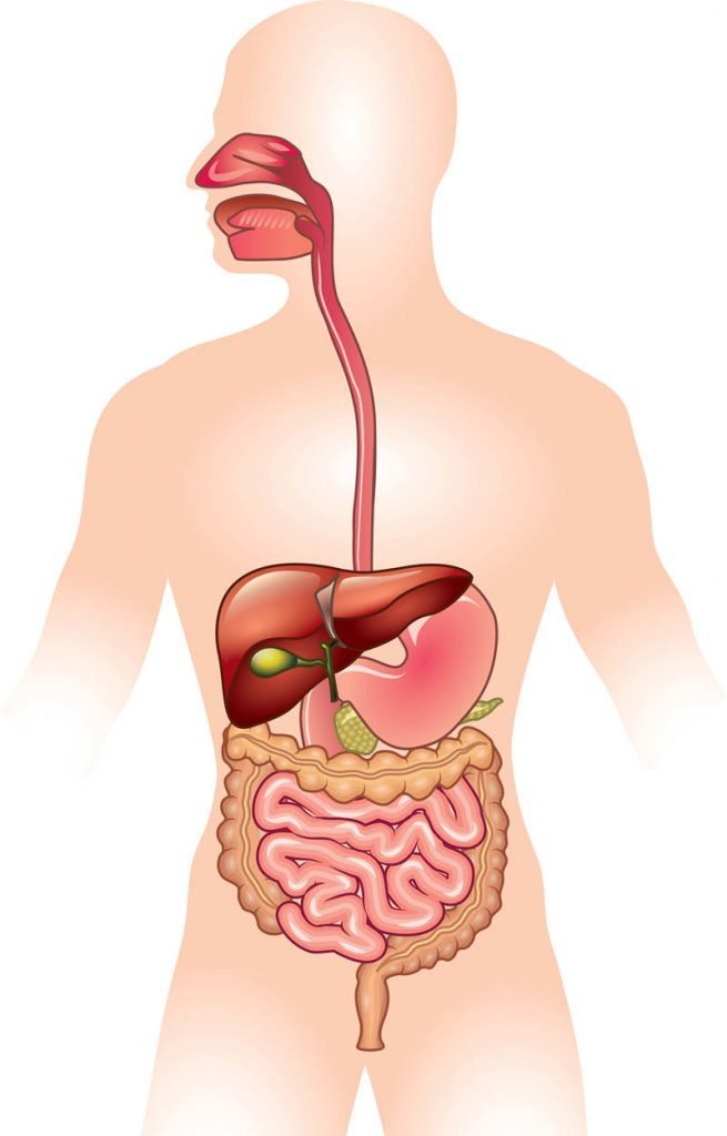 Digestive Disorders And Your Internal Clock Chronobiology