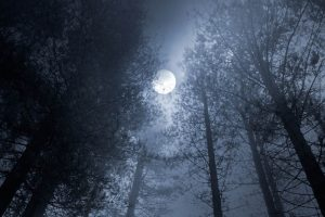 Why a Scream in the Night is Scarier Than a Scream in the Dark
