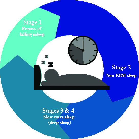 the basics of your sleep cycle 2
