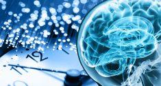 Schlaf Wach Zyklus: Ein einfacher Zwei-Zyklus-Apparat schaltet den ganzen Tag lang Neuronen ein und aus