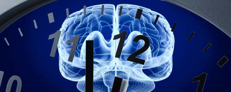 Das Gedächtnismolekül: Verbesserung des Langzeitgedächtnisses mit IGF2