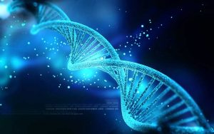 Newly-Discovered Genes Cause Circadian Rhythms to Change as We Age