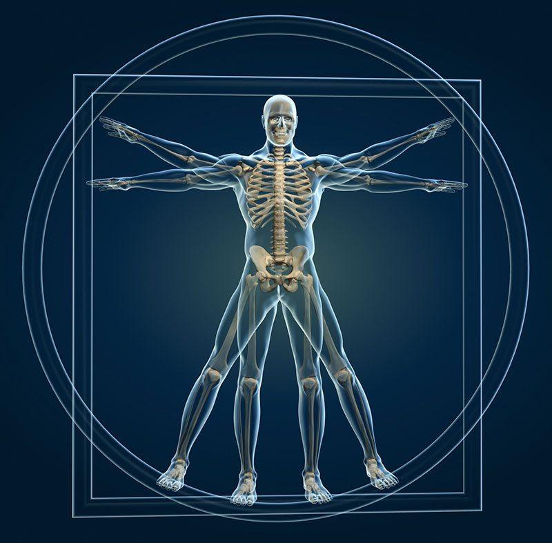 Wie Sie der circadiane Rhythmus Ihrer Nieren beeinflusst ...