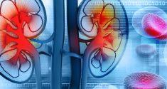 Wie Sie der circadiane Rhythmus Ihrer Nieren beeinflusst