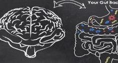 Darmbakterien und psychische Gesundheit: ein weiterer Zusammenhang