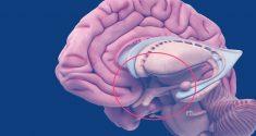 Die Enträtselung der Mysterien unserer biologischen Rhythmen: Der suprachiasmatische Nucleus