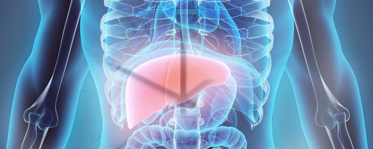 New Findings Show the Liver has a Clear Rhythm