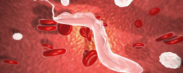 Research Finds Sleeping Sickness Parasites Influenced by Internal Clock