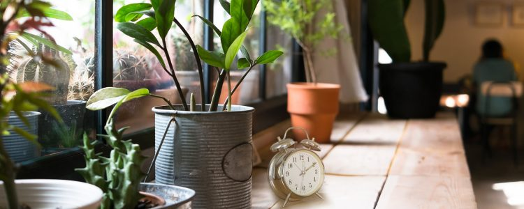 Plants Use Protein Signaling to Tell Time