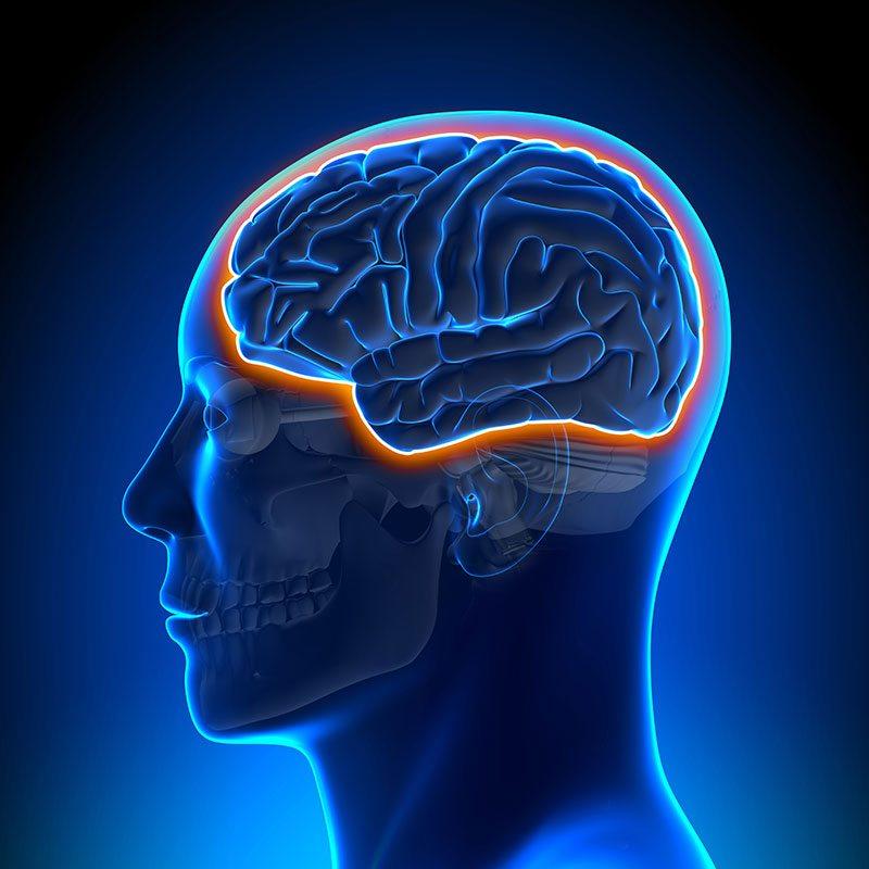 The Link Between Melatonin and Neurological Diseases ...