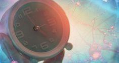 Forscher ermitteln Neuronen, die unsere innere Uhr steuern