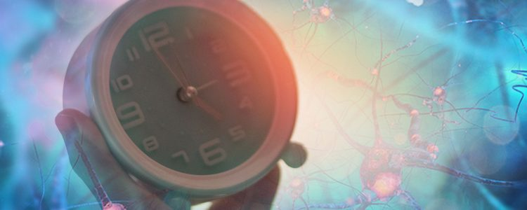 Dopamine-Producing Neurons Help Regulate Biological Clock