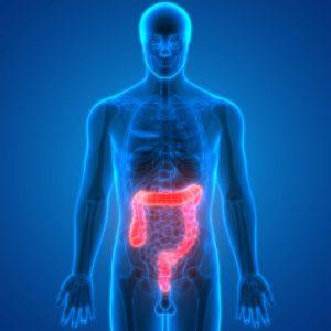 "How Gut Bacteria ""Hijack"" Your Intestinal Circadian Rhythm, Causing Weight Gain 1"