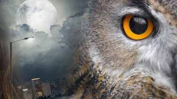 Night Owl Death Risk Higher Than Early Risers'