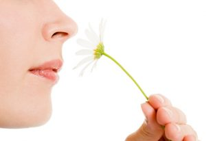 Newly Discovered Circadian Rhythm of Smell May Influence Diet, Food Choices 1