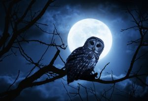 International Research Review Outlines Night Owl Health Risks 1