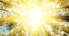 Daily Exposure to Bright Light Protects Heart Health