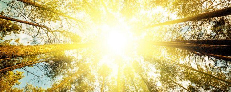 Helles Licht gut für die Herzgesundheit 2