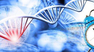 Chronobiologie und Stoffwechsel: Die Rolle von Uhrengenen