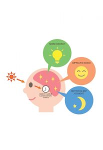 Chronobiology and Sight: How the Eyes Synchronize Our Internal Clocks 2